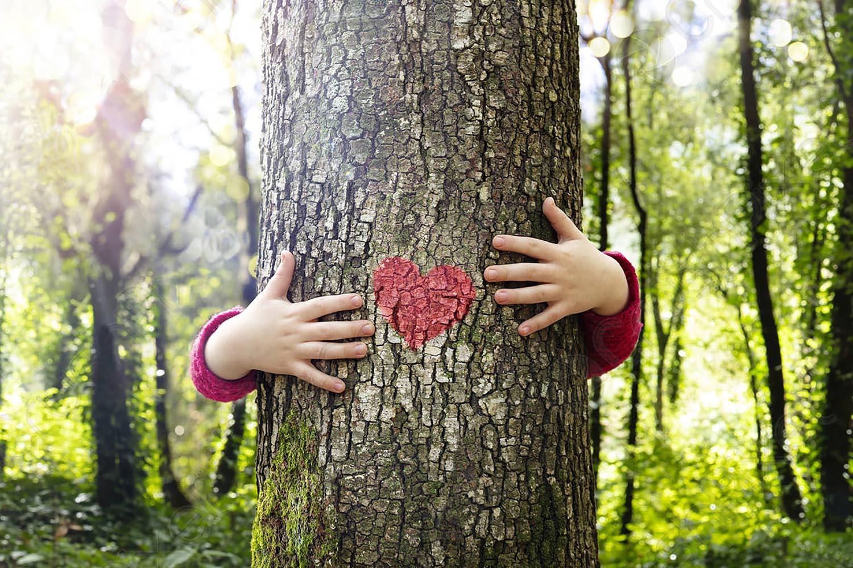Ako ne izliječimo ranjene šume nema ni nama lijeka